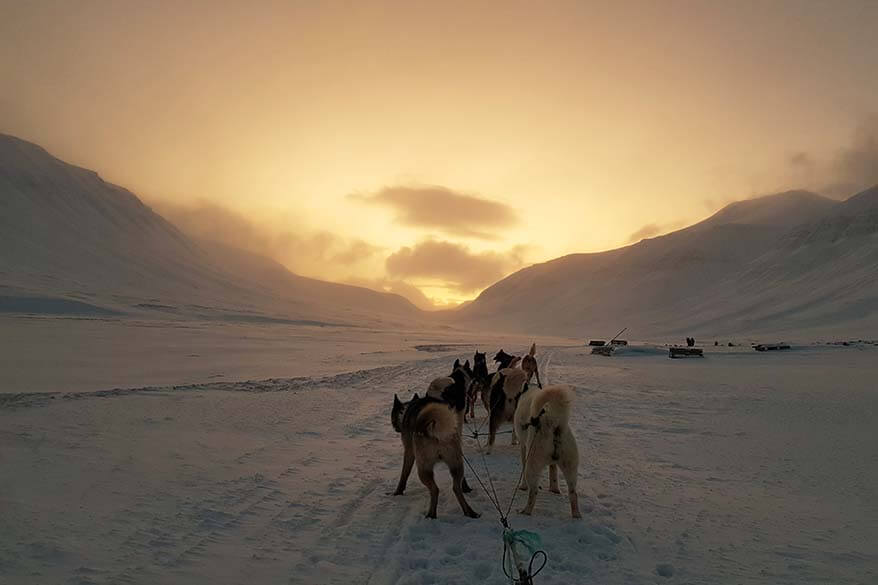 Dog sledding in Svalbard in February