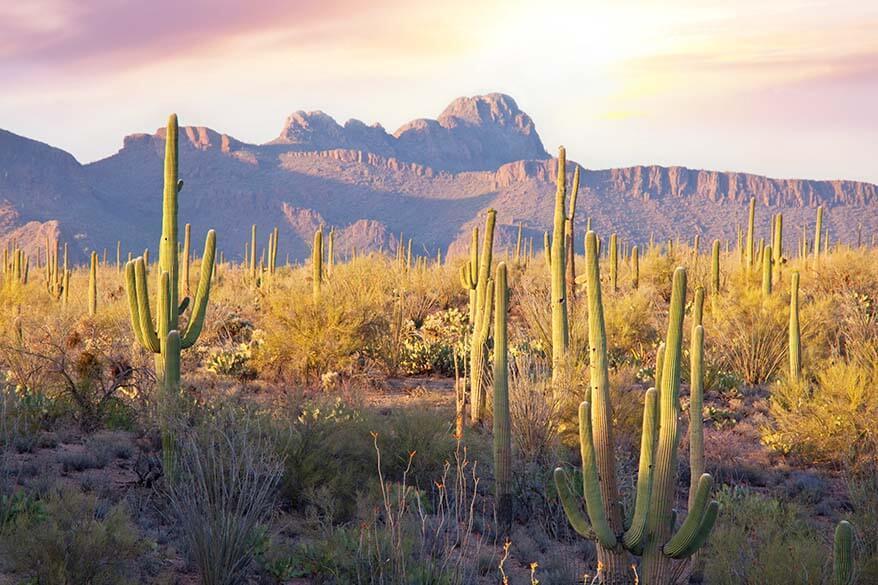Saguaro National Park in winter