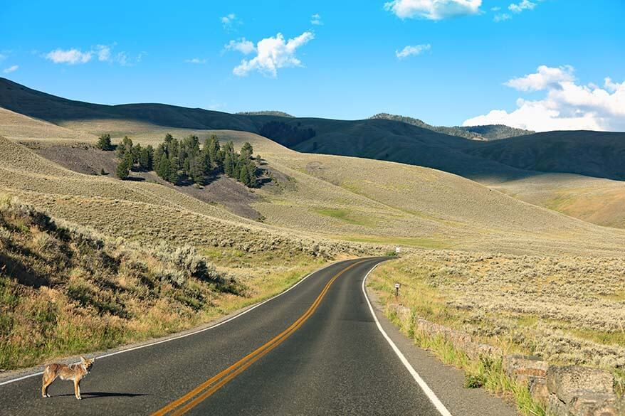 Best roads in the world - Lamar Valley in Yellowstone National Park