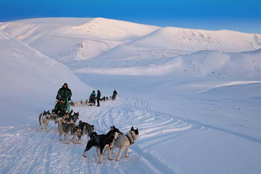 Green Dog Svalbard dog sledding to ice caves tour