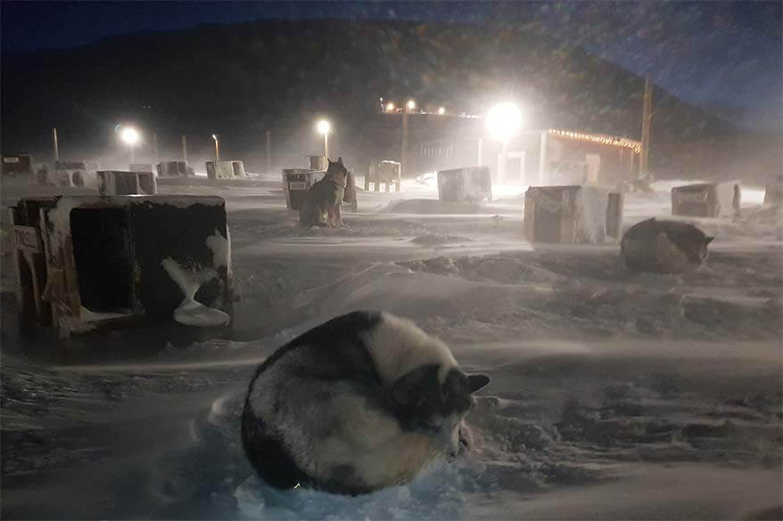 Huskies in Svalbard in winter
