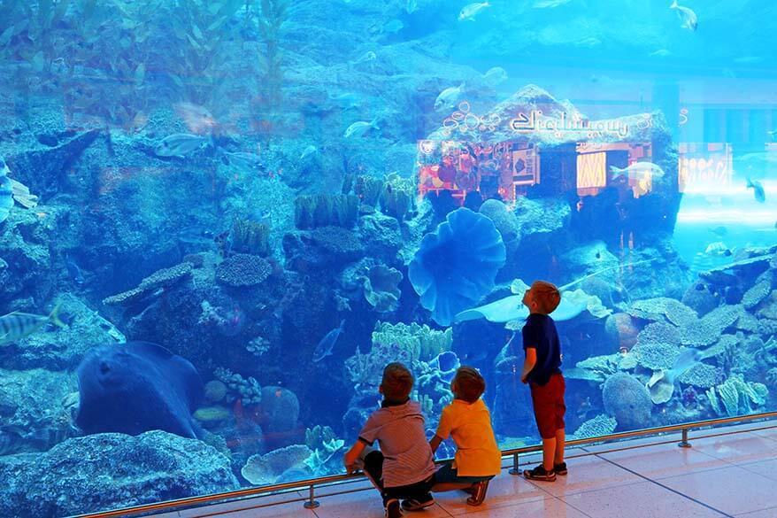 Top 8 School Trip Ideas for Elementary Students in Dubai