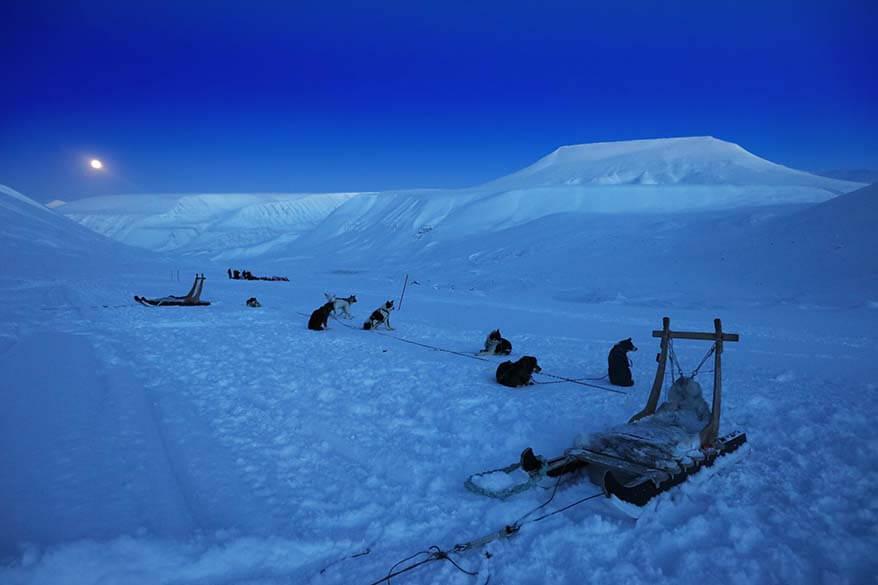 Sled dogs at Scott Turner Glacier near Longyearbyen in Spitsbergen Svalbard