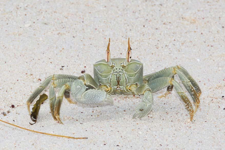 Crab on a beach in Seychelles