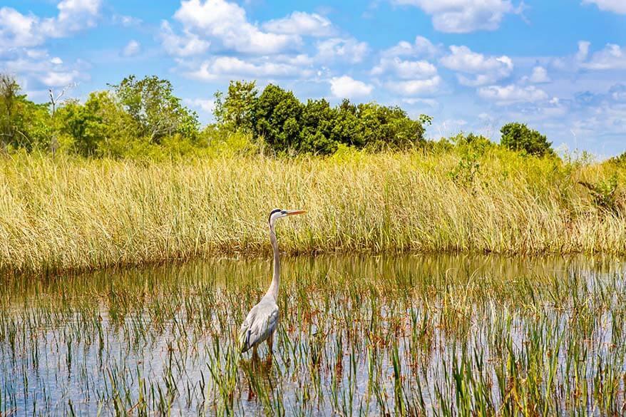 Everglades National Park in spring