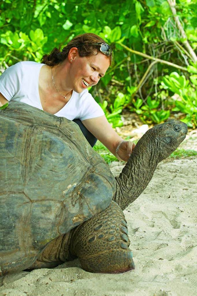 Giant Tortoise on Curieuse Island Seychelles