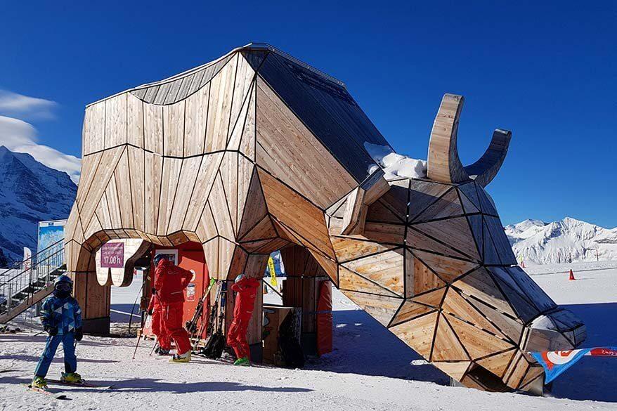 Mannlichen cow at the Mannlichen Childrens Paradise beginner ski area