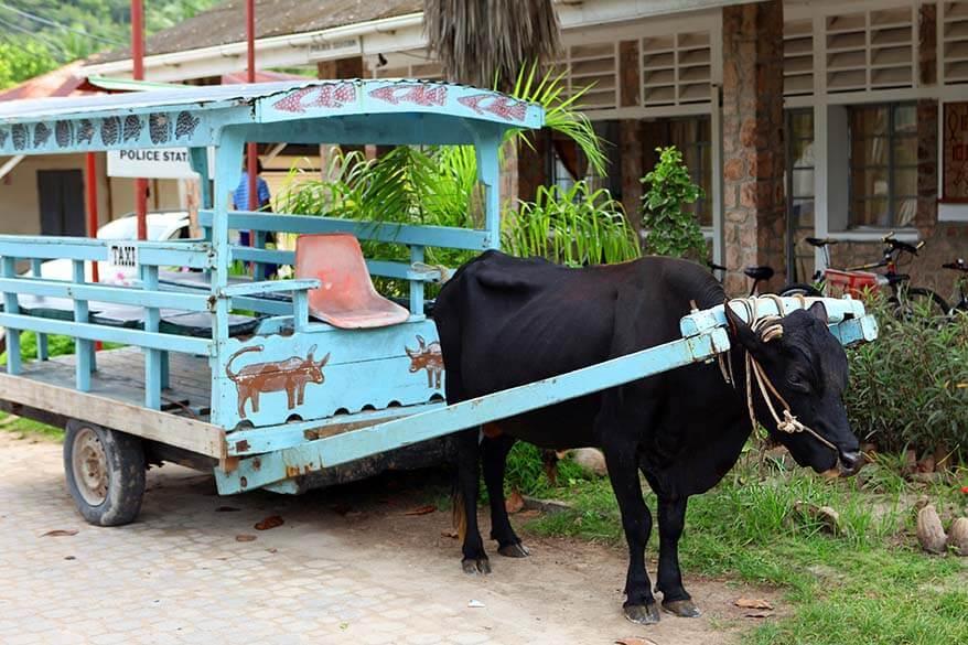 Ox cart on La Digue island in Seychelles