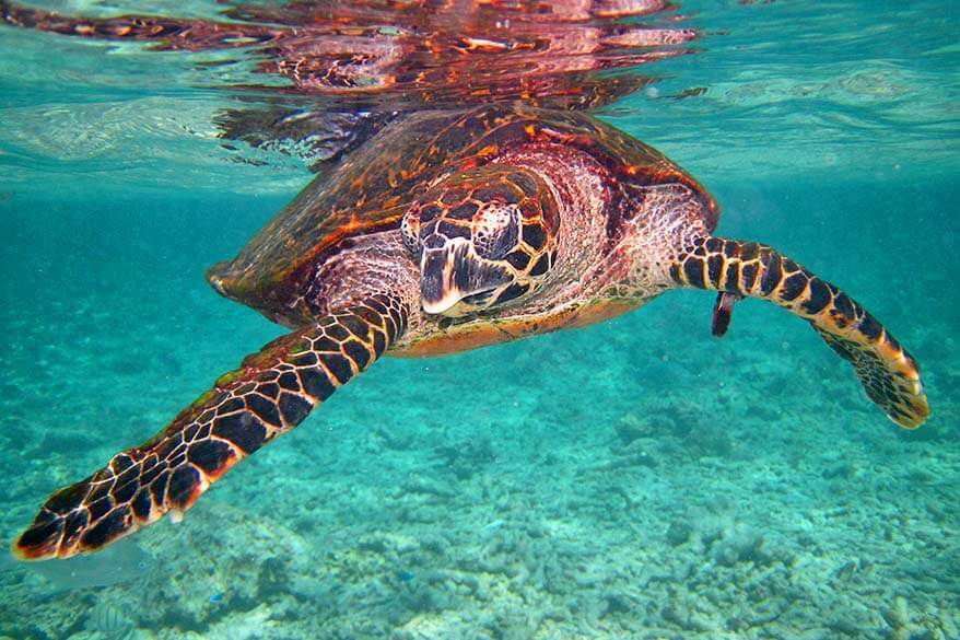 Snorkeling with sea turtles in Seychelles