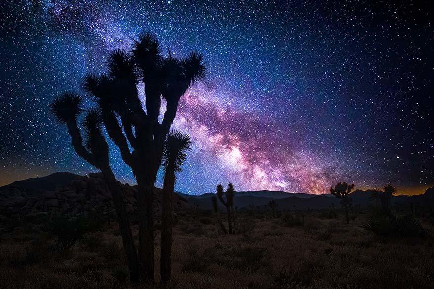 Stargazing at Joshua Tree National Park