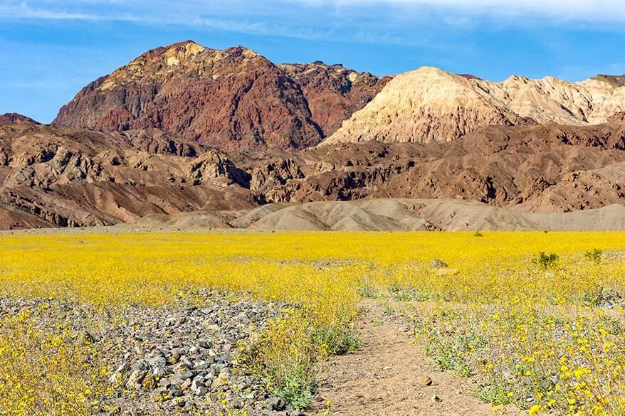 Superbloom in Death Valley in March
