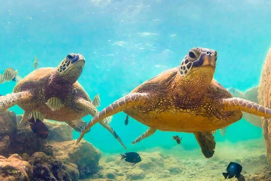 Best Maui activities - swimming with sea turtles