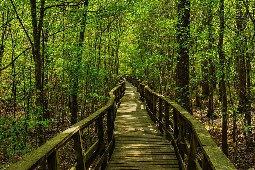 Boardwalk Trail in Congaree National Park in spring