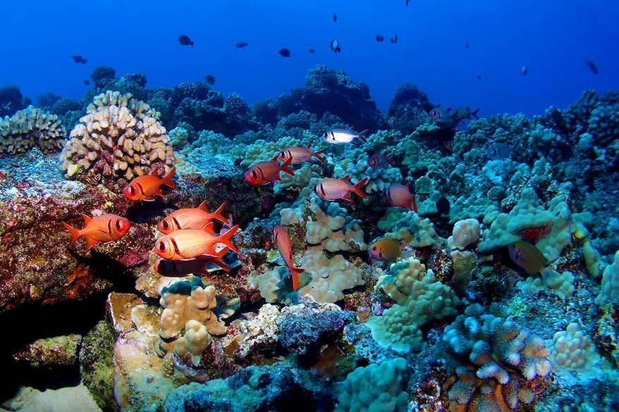 Snorkeling at Molokini is one of the best tours in Maui Hawaii