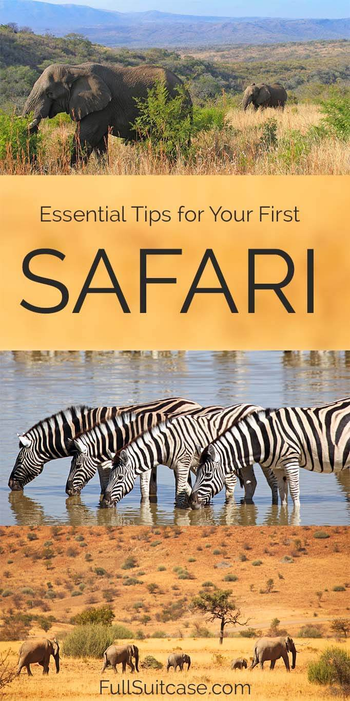 Top tips for African Safari - things to know before going on safari trip