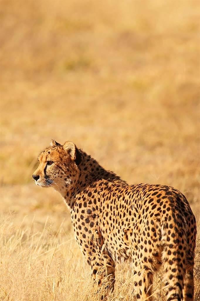 Travel photography tips - wildlife