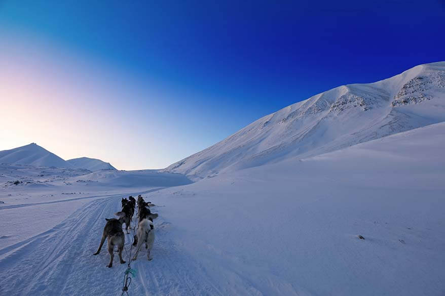 Dog sledding in Svalbard Northern Norway