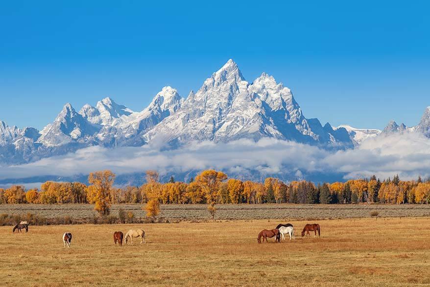Horses at a ranch near Jackson Hole Wyoming