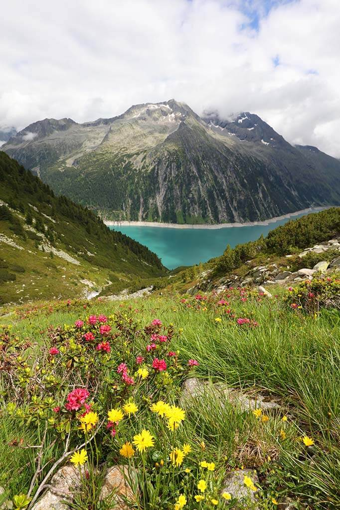 Schlegeis lake and summer flowers in the Austrian Alps.
