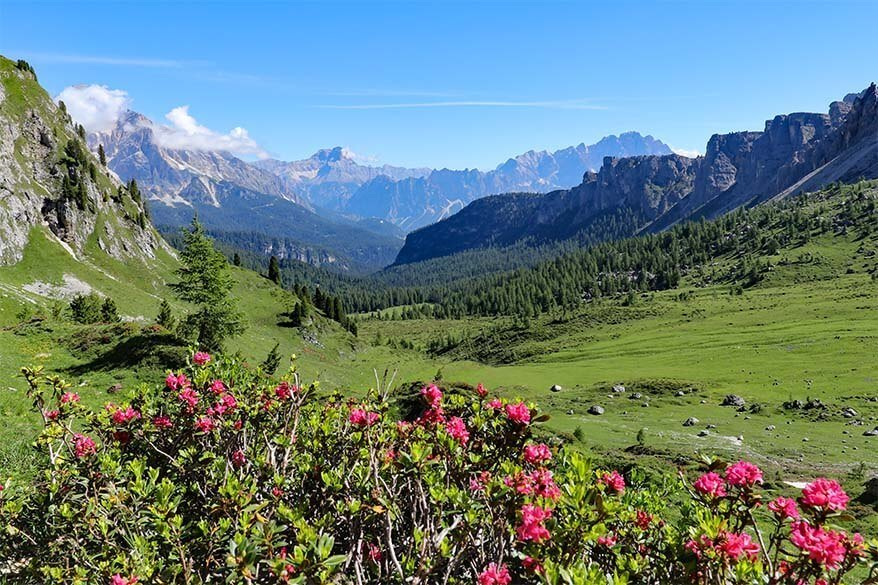Alpine scenery and summer flowers on the hike from Passo Giau to Forcella Giau