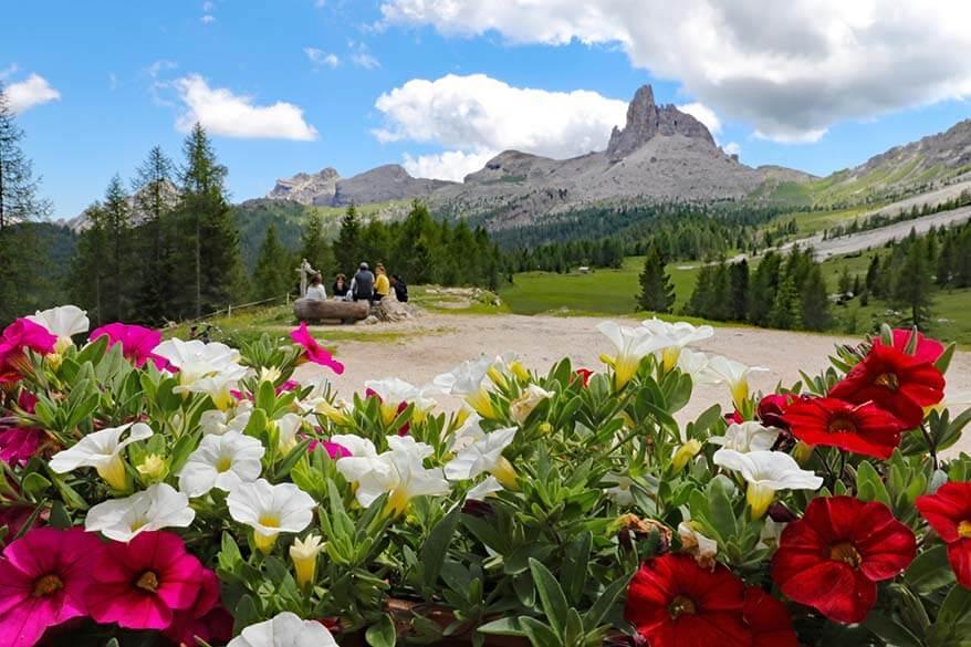 Summer flowers and mountain view as seen from Rifugio Croda da Lago in Italian Dolomites