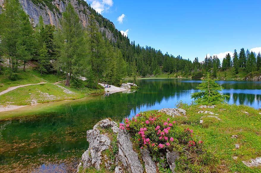 Summer flowers at Lago Federa