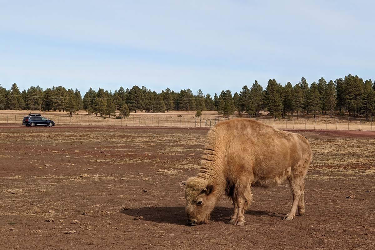 Bearizona Wildlife Park in Williams Arizona