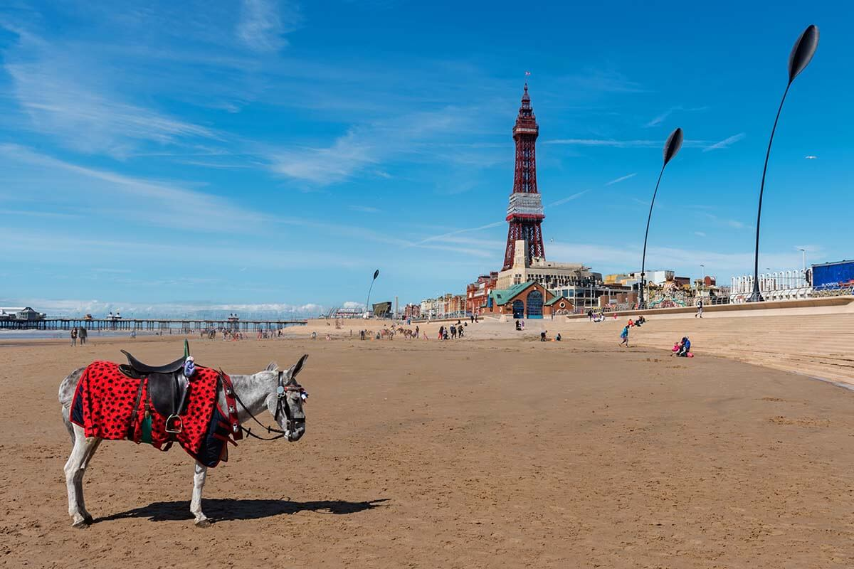 Iconic Blackpool donkeys on the beach near Blackpool Tower
