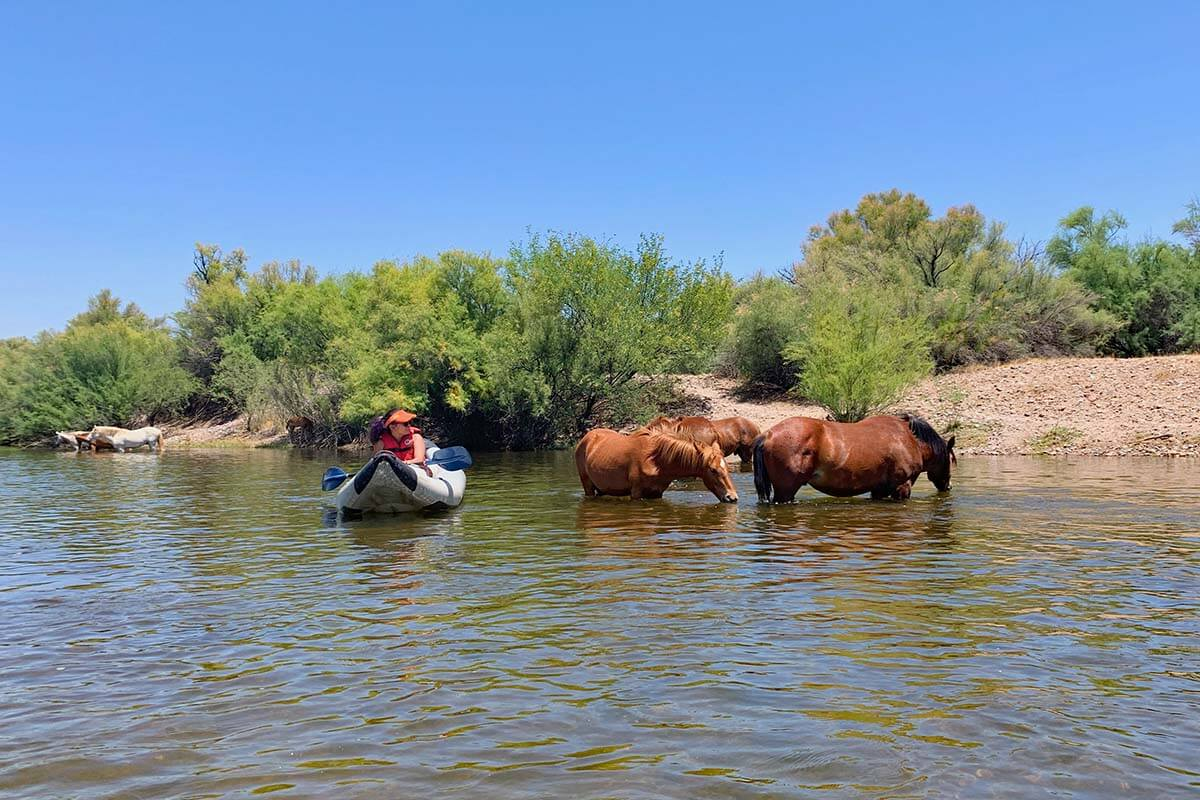 Kayaking and Wild Horses of Salt River in Arizona