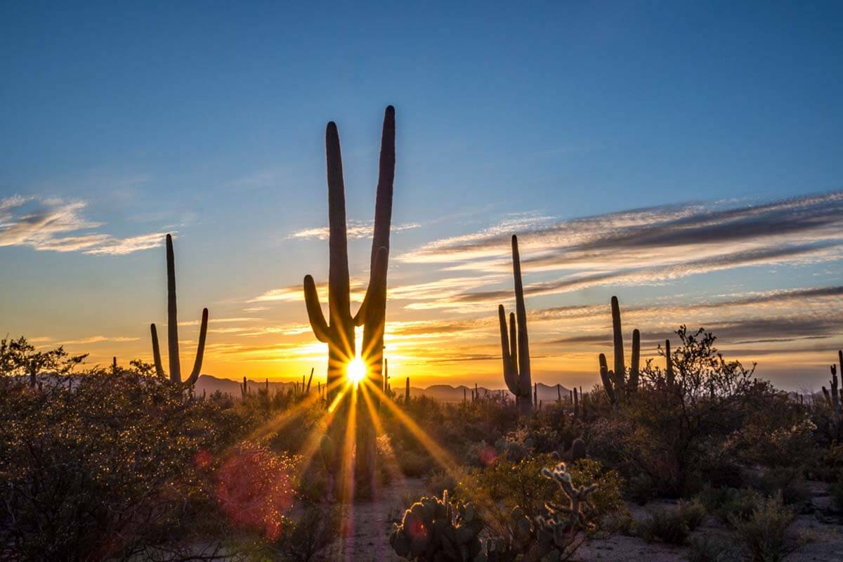 Saguaro National Park is one of the nicest places to see in Arizona