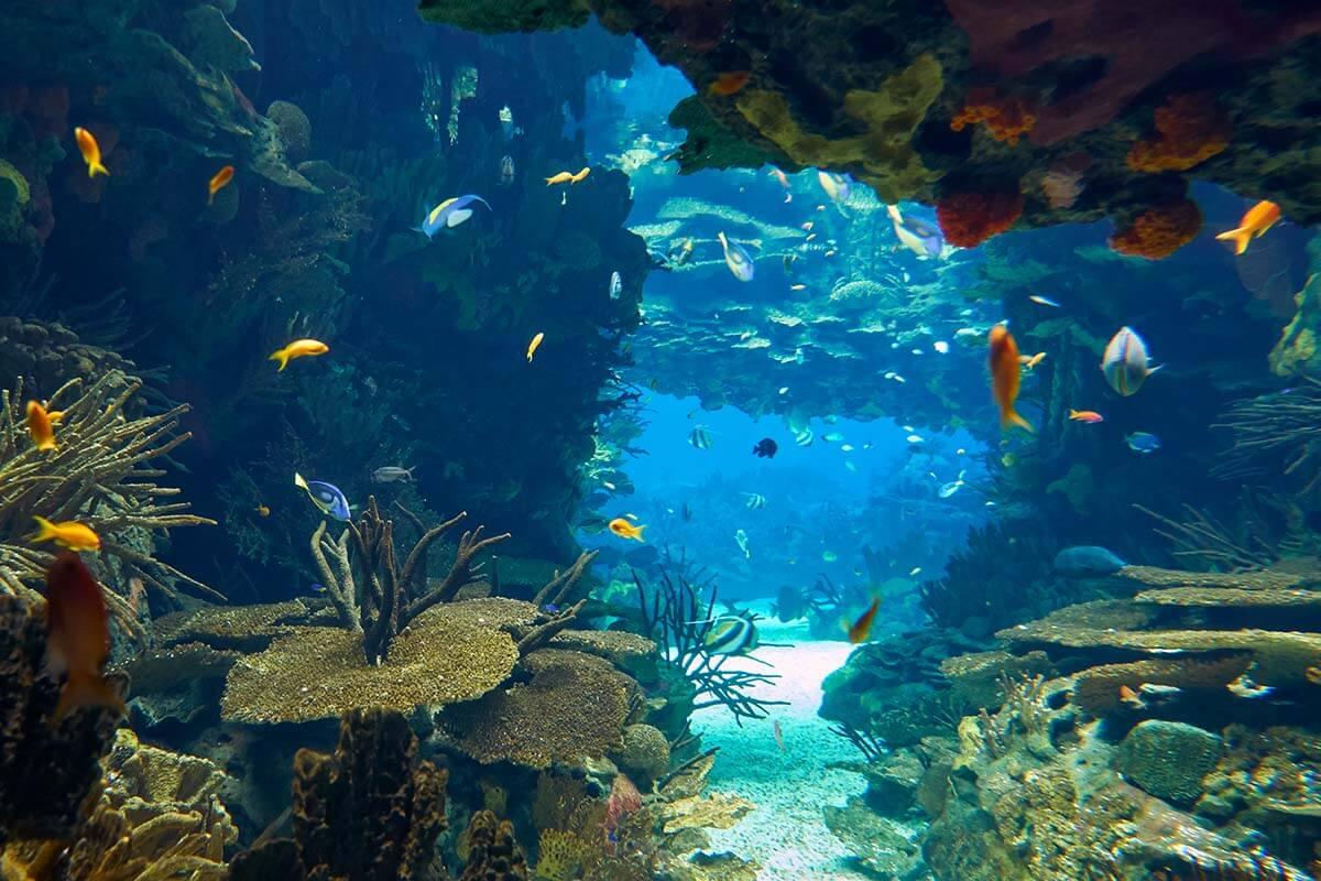 Aquarium at Lisbon Oceanarium