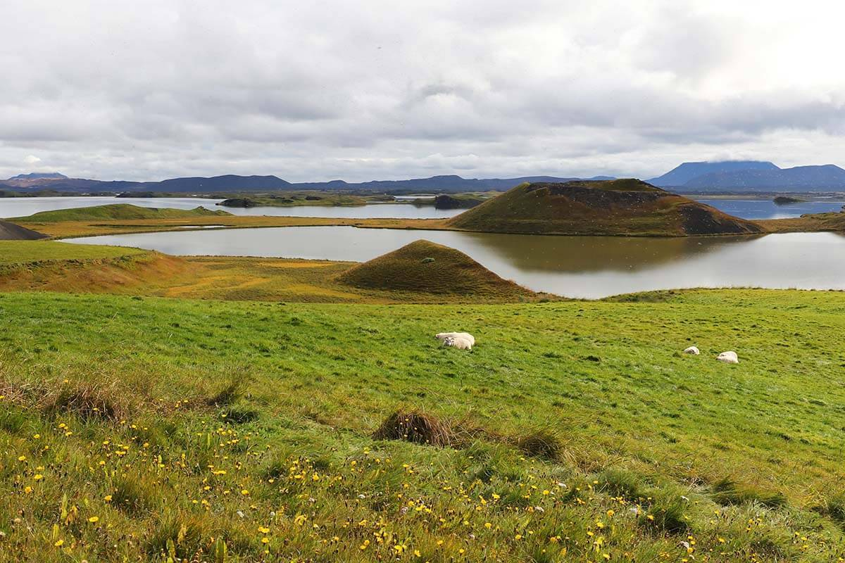 Myvatn lake in Iceland
