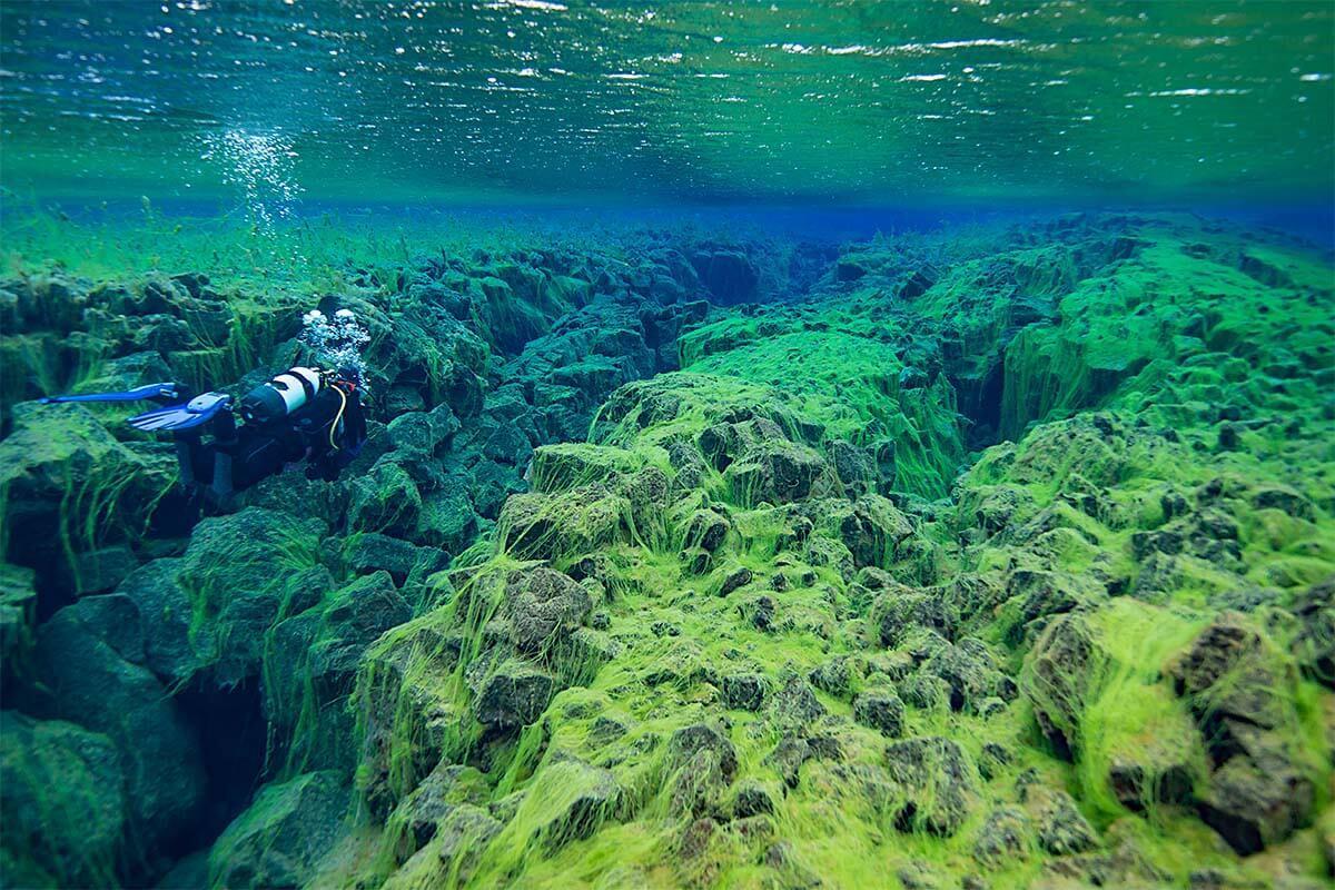 Silfra snorkeling in Iceland
