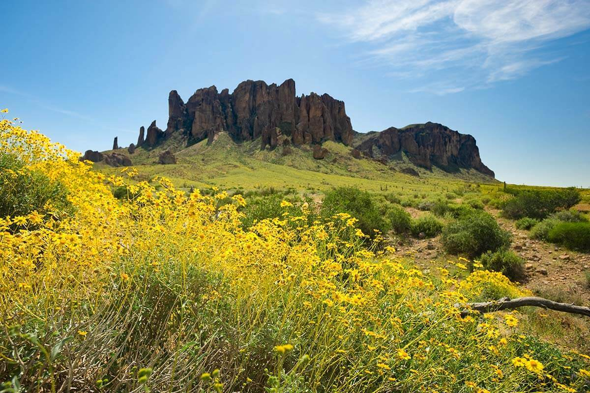 Spring flowers in the Arizona desert, Superstition Mountains near Phoenix