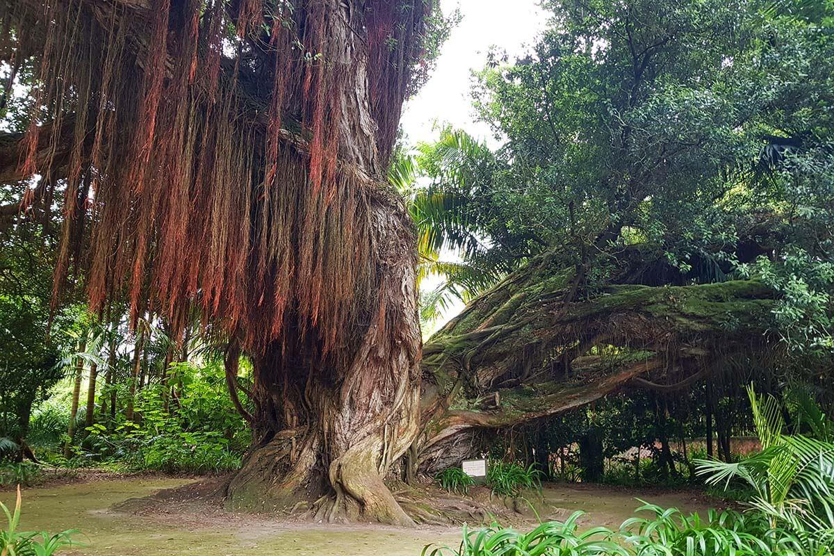 Park Terra Nostra in Furnas Azores
