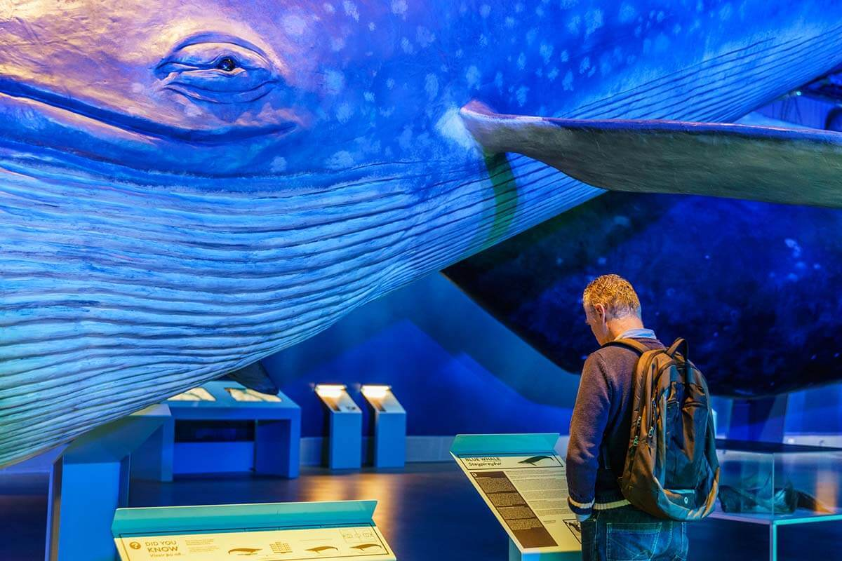 Blue Whale at Whales of Iceland exhibition in Reykjavik