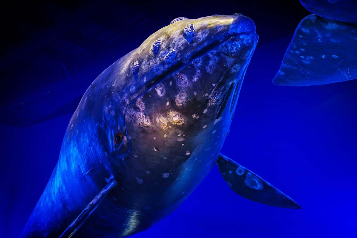 Whales of Iceland exhibition is one of the top places to see in Reykjavik